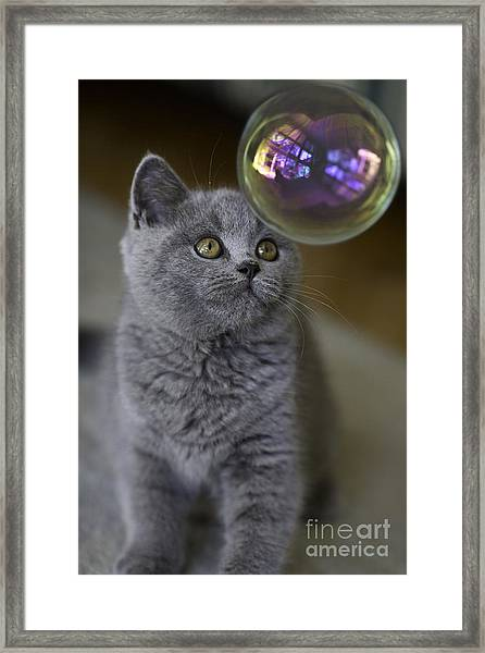 Archie With Bubble Framed Print