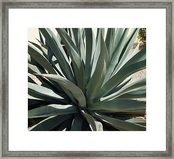 Arizona Agave Framed Print