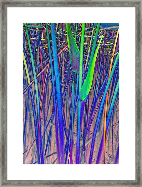 Arrow Reeds Framed Print by Georgia Bassen