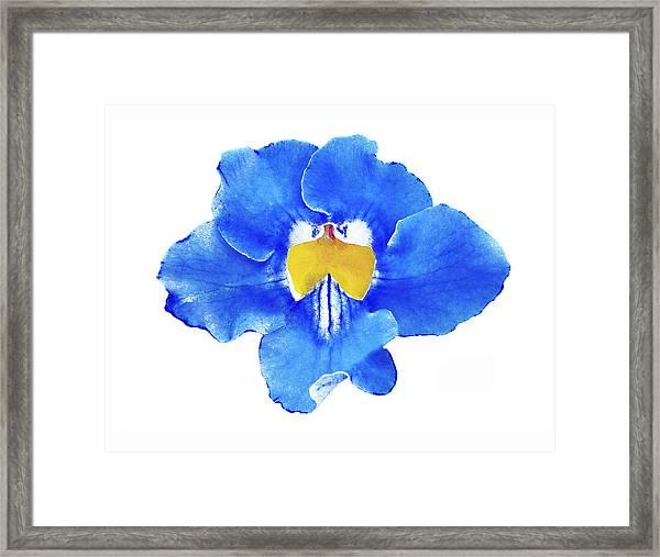 Art Blue Beauty Framed Print