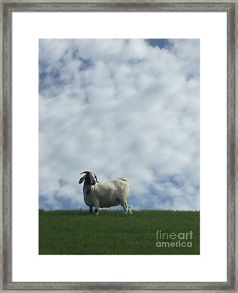 Art Goat Framed Print