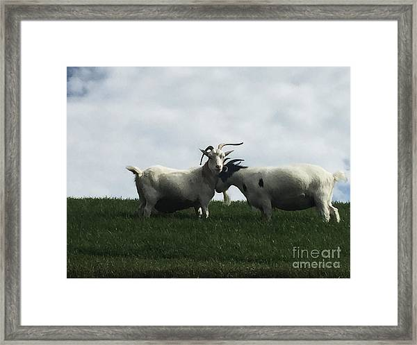 Art Goats I Framed Print