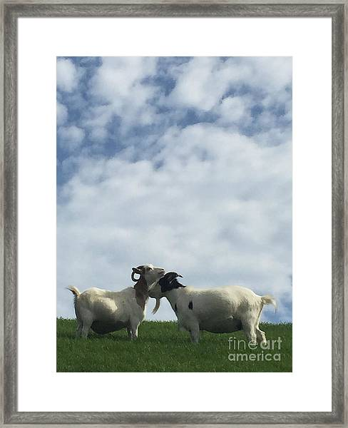 Art Goats II Framed Print