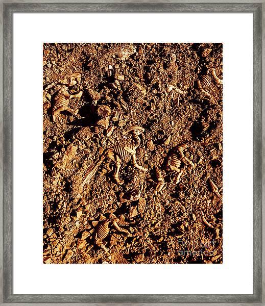 Art Of A Dinosaur Dig Framed Print
