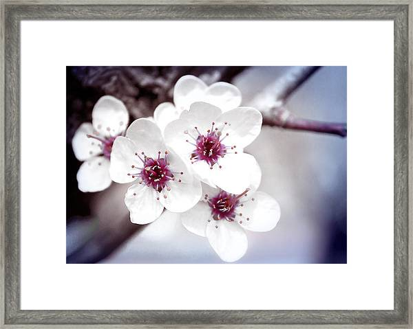 Art Of Spring Framed Print