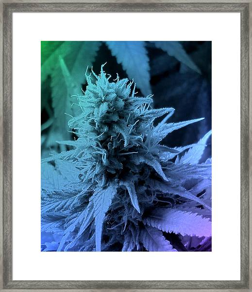 Artful Oasis Macro Abstract 112216.5 Framed Print
