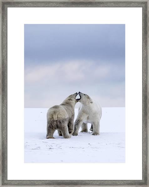 Artic Antics Framed Print