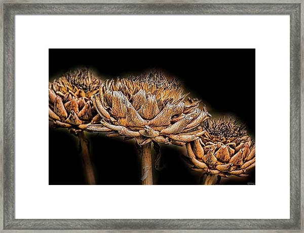 Framed Print featuring the photograph Artichokes Heads by Dee Browning