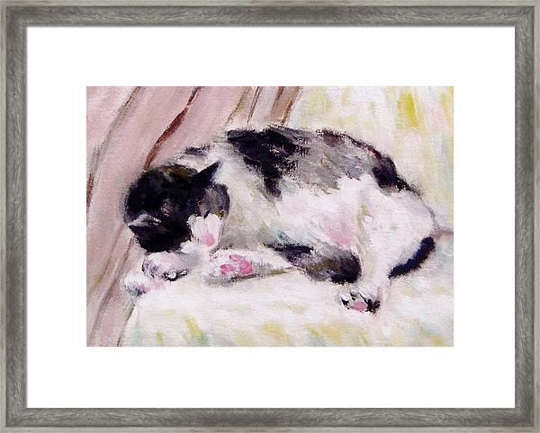 Artist's Cat Sleeping Framed Print
