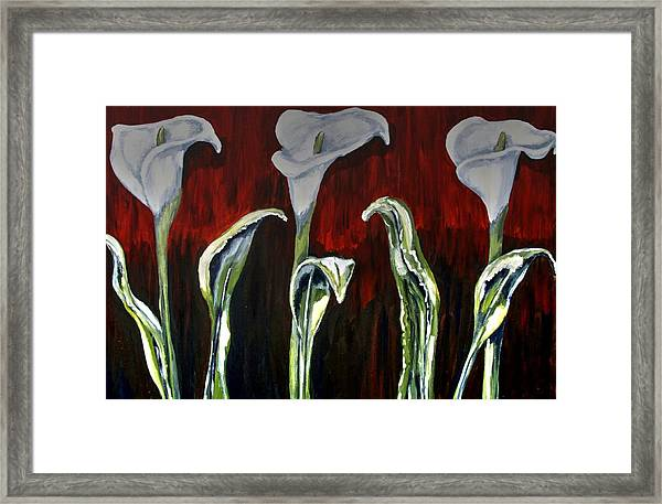 Arum Lillies Framed Print