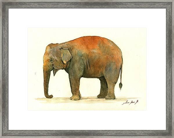 Asian Elephant Framed Print