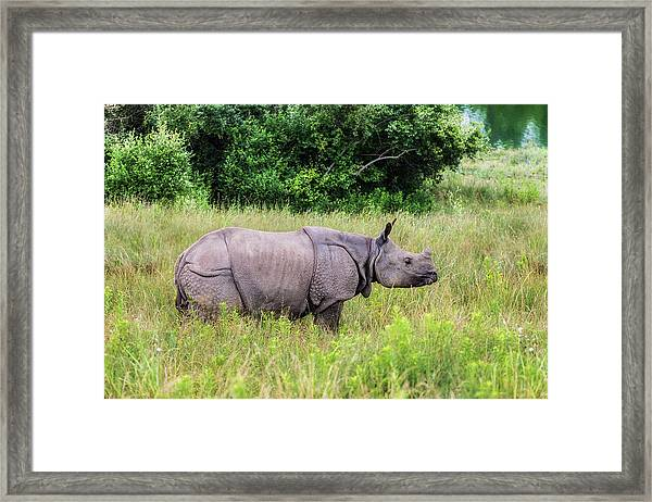 Asian Rhinoceros Framed Print