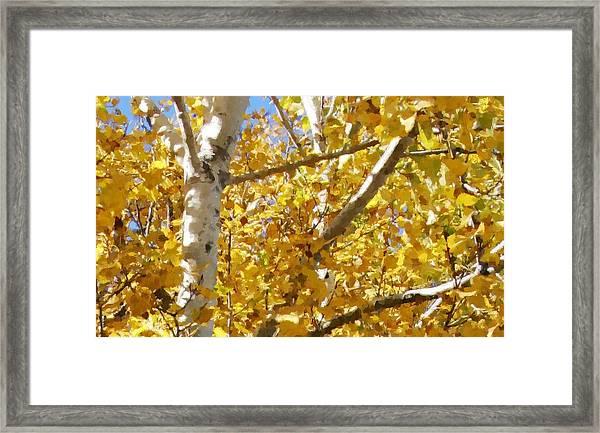 Aspen 2 Framed Print