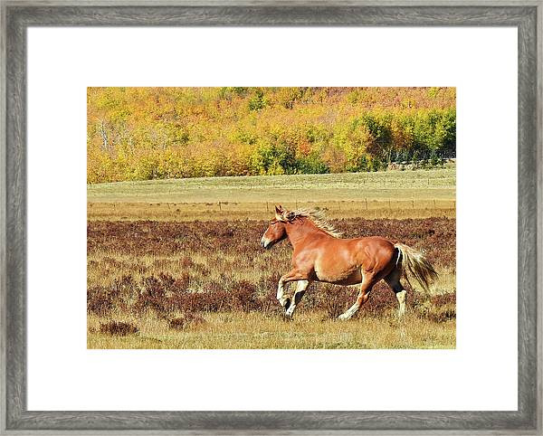 Aspen And Horsepower Framed Print