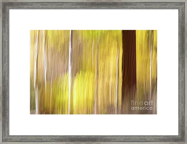 Aspen Blur #1 Framed Print