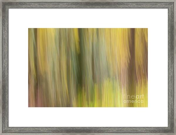 Aspen Blur #2 Framed Print