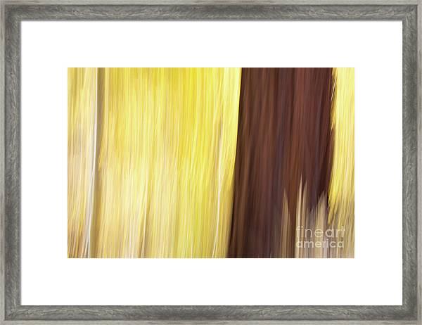 Aspen Blur #3 Framed Print