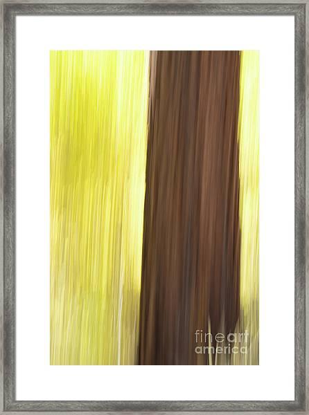 Aspen Blur #4 Framed Print