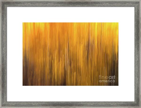 Aspen Blur #5 Framed Print