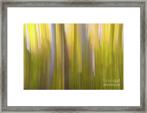 Aspen Blur #6 Framed Print
