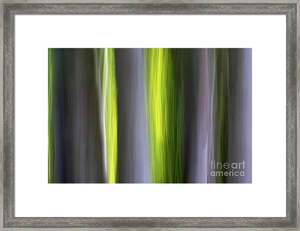 Aspen Blur #7 Framed Print