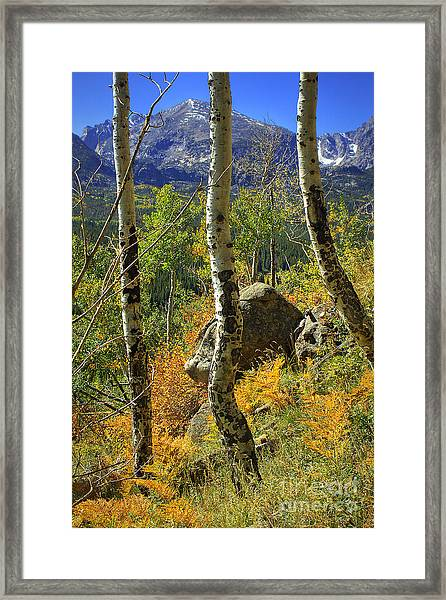 Aspen Curves Framed Print
