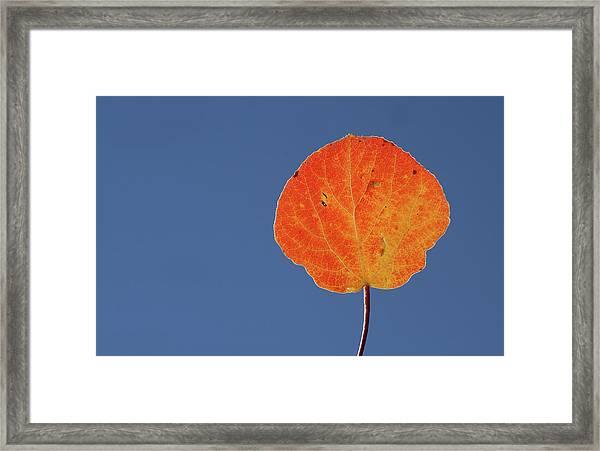 Aspen Leaf 1 Framed Print