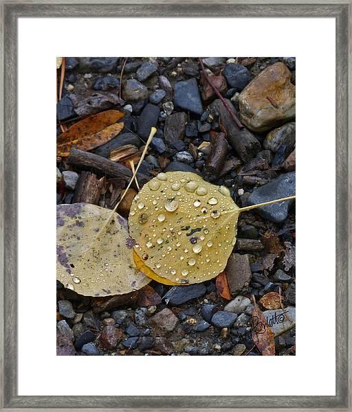 Aspen Leaf Framed Print