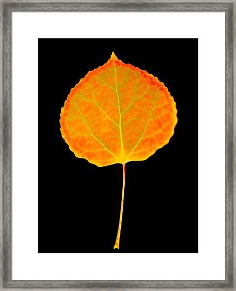 Aspen Leaf Glory Framed Print