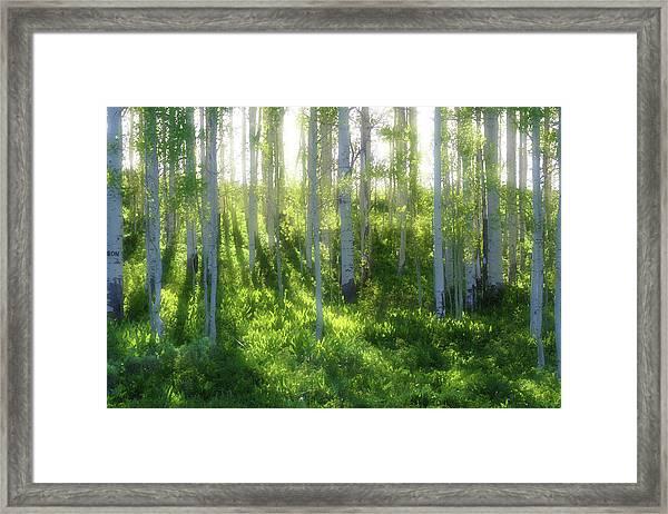 Aspen Morning 3 Framed Print