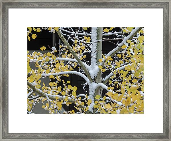 Aspen Snow Framed Print
