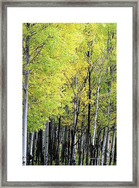 Aspen Splendor Framed Print