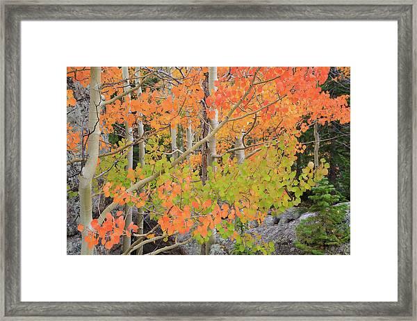 Aspen Stoplight Framed Print