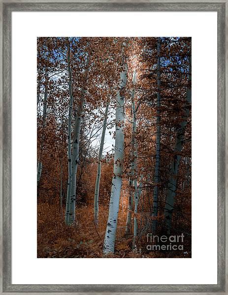 Aspen Trees Ryan Park Wyoming Framed Print