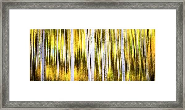 Aspen Wonderland Framed Print