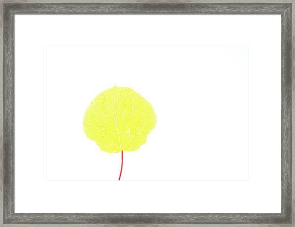Aspen Yellow Framed Print