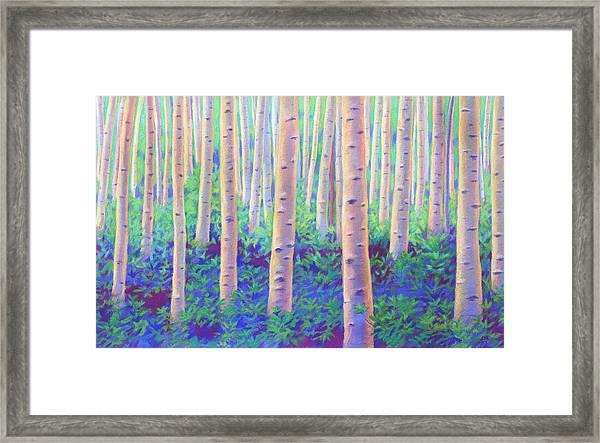 Aspens In Aspen Framed Print