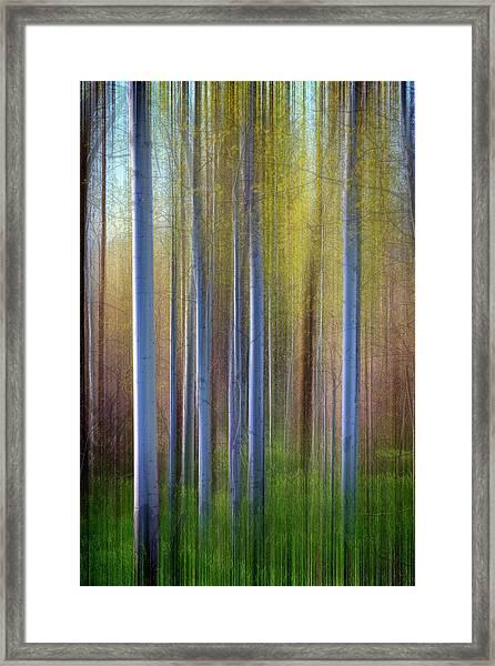 Aspens In Springtime Framed Print