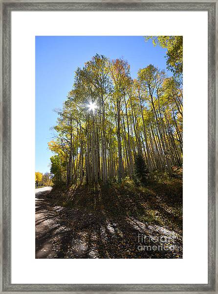 Framed Print featuring the photograph Aspens In The Fall by Kate Avery