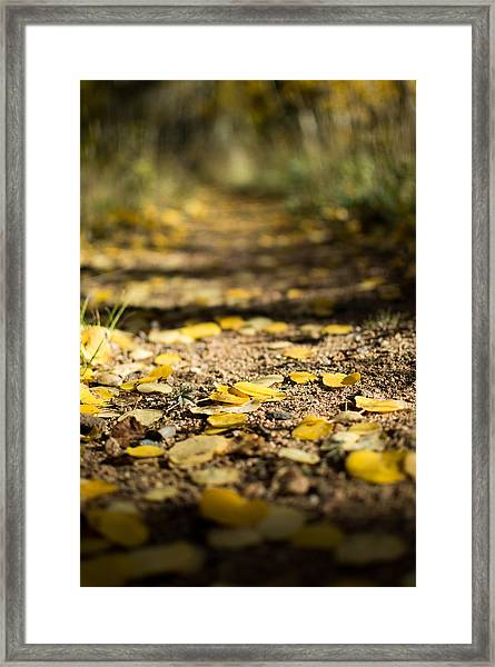 Aspen Leaves On Trail Framed Print