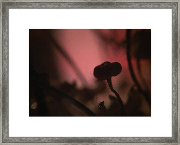 Aspiration With Ghost Framed Print