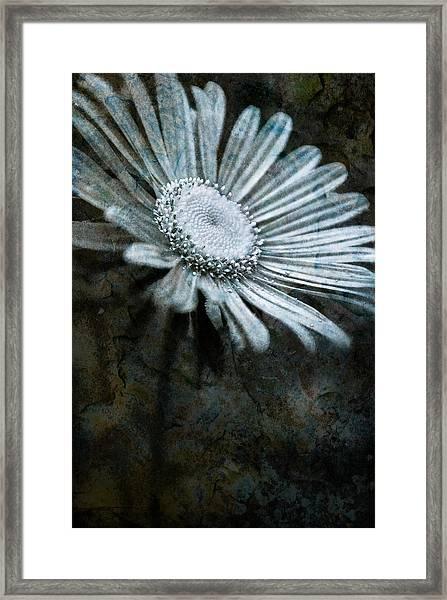 Aster On Rock Framed Print