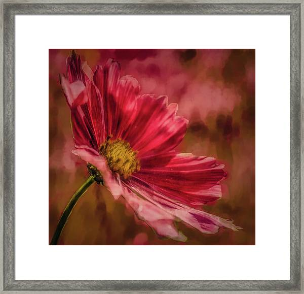 Aster Red Painterly #h1 Framed Print