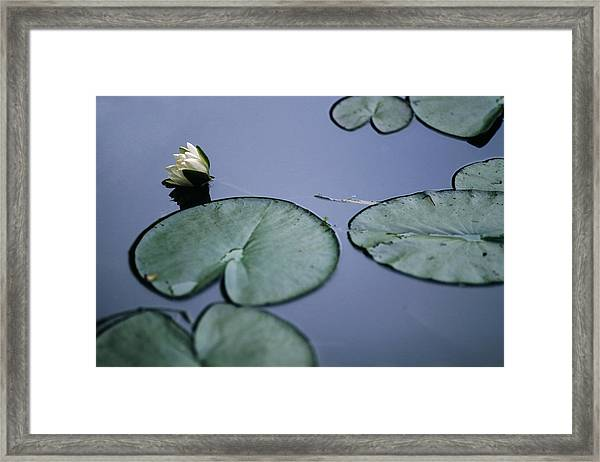 At Claude Monet's Water Garden 2 Framed Print