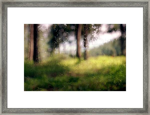 At Menashe Forest Framed Print