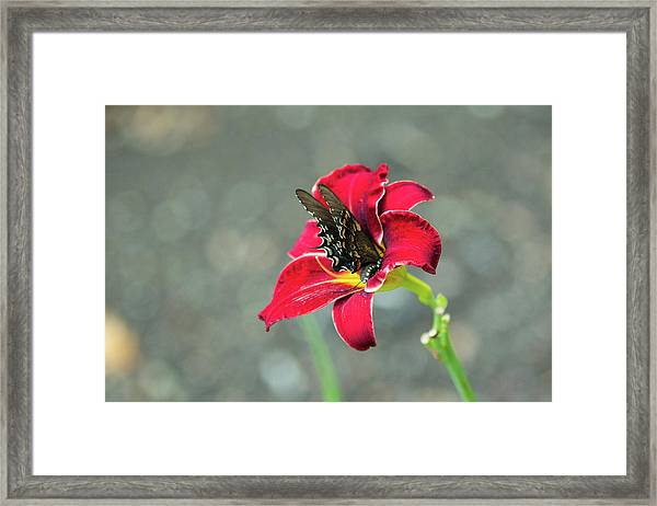 At One With The Orchid 2 Framed Print