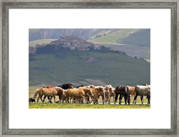 Castelluccio Di Norcia, Parko Nazionale Dei Monti Sibillini, Italy Framed Print