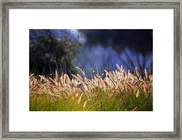 At The Rock Garden Tel Aviv Framed Print