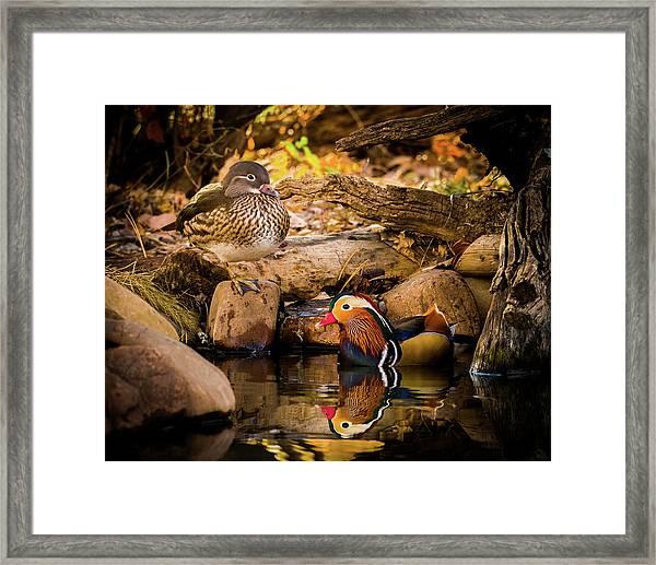 At The Waters Edge - Mandarin Ducks Framed Print