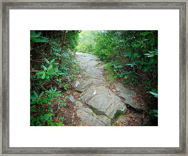 At-trail Blazes Framed Print